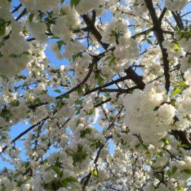 Wir wünschen uns den Frühling herbei! – Veranstaltung für Menschen mit und ohne Demenz
