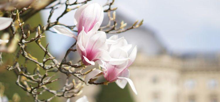 Was uns der Frühling erzählt