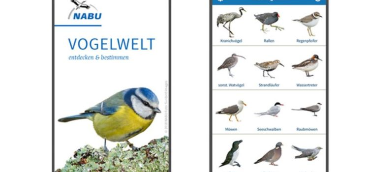 #tododahoam – Vögel bestimmen