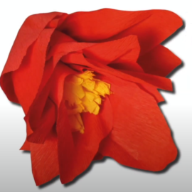 Krepp-Rose – Basteln mit Kindern